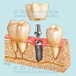 Dentistry (D)