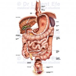 Gastrointestinal-dieases_WM