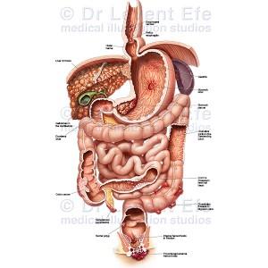 Gastrointestinal-dieases_WM